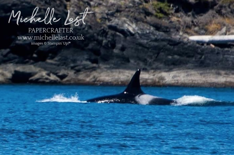 Orca Whale Watching Tour