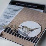 Stamped wren